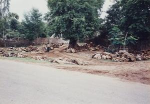 118.木が何年もたって石となり高値で売れる.jpg
