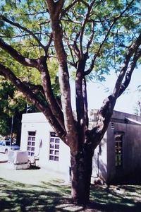 127.北マリアナ連邦博物館.jpg