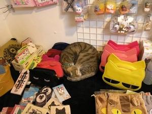 130.店の陳列に紛れる猫4.jpg