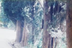 135.糸杉の散歩道(ヘネラリフェ).jpg