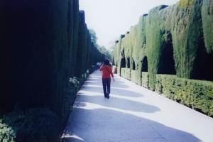 139.セカーノの糸杉の散歩道.jpg