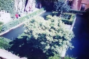 140.糸杉の中庭.jpg