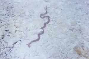 178.ウミヘビ.jpg