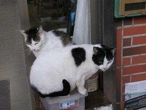180.九份の猫2.jpg