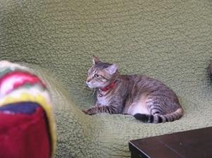 224.KamoGamo猫窩猫17.jpg