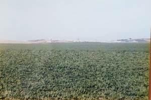 244.セビーリャへ向かう途中の白い村と草原.jpg