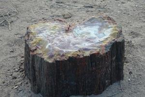 245.木の石3.jpg
