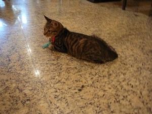 248.野喵中途咖啡の猫12.jpg
