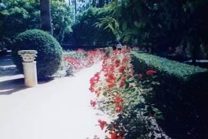 282.庭園(アルカサル).jpg