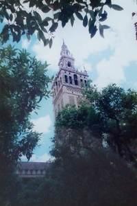 304.オレンジのパティオからヒラルダの塔.jpg