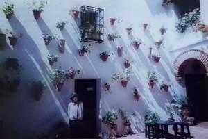 355.Cruz de Mayo(5月の十字架)最優秀パティオ.jpg
