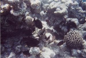53.魚20.jpg
