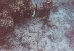 59.魚24.jpg