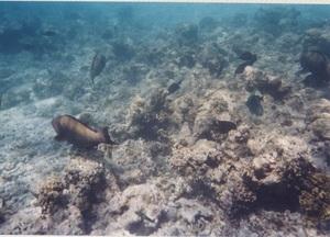 73.魚38.jpg