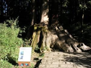 森林遊楽区1.jpg
