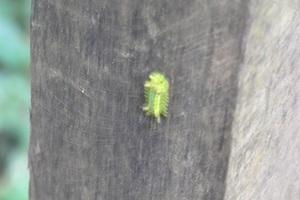 毛虫1.jpg